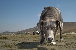 Staying in the Game: How to Motivate Your Dog
