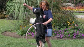 New Frontiers – Getting Behaviour in Dog Training Part 2